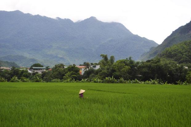 Mujer trabajando en arrozales