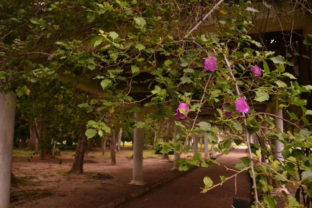 Galería del Jardín Botánico