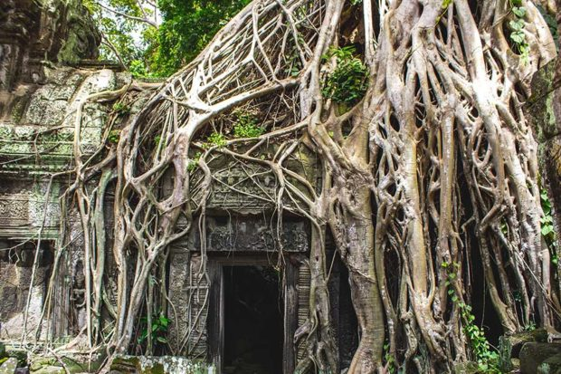 Angkor Wat, los templos que se dejaron abrazar por la selva
