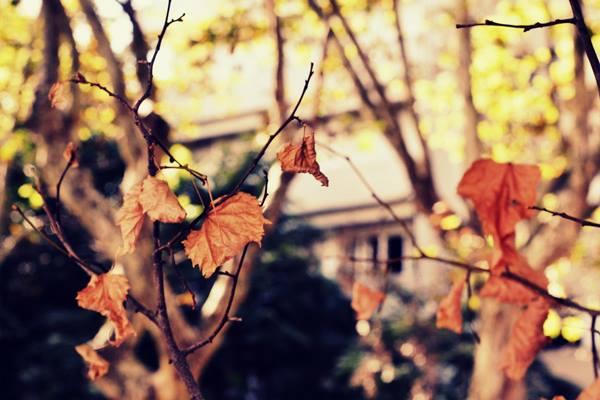 Aprovechemos el otoño