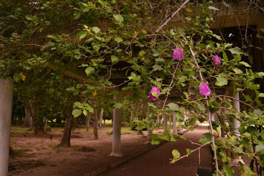 Galería Jardín Botánico