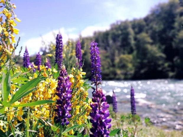 Guía para viajar a Bariloche