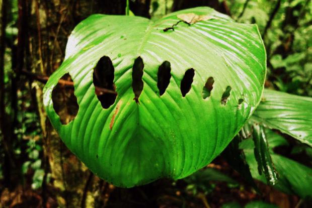 Parque Yasuni en Ecuador, una puerta al Amazonas